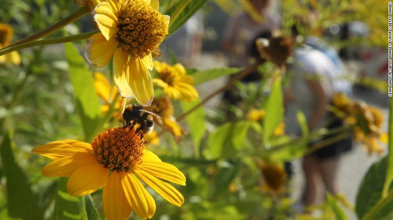 Especies de insectos están en declive