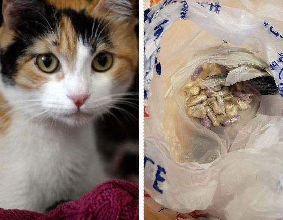 Sale a pasear gato y regresa con bolsas de droga