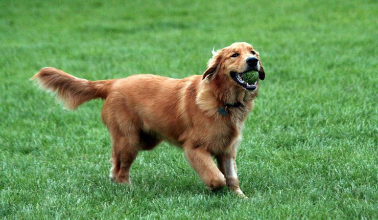 Perro roba a cachorro ante los ojos atónitos de su dueña