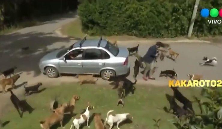 A Robertito Funes lo atacaron los perros y en Bendita hicieron un informe desopilante