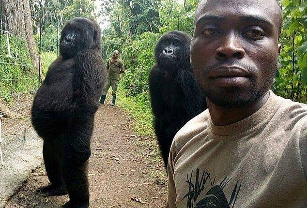 La selfie de los gorilas que le envía un mensaje al mundo