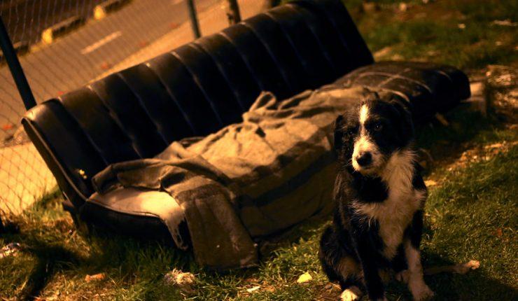 Indignación provocó familia que vende a su perro porque compraron nuevos sofás