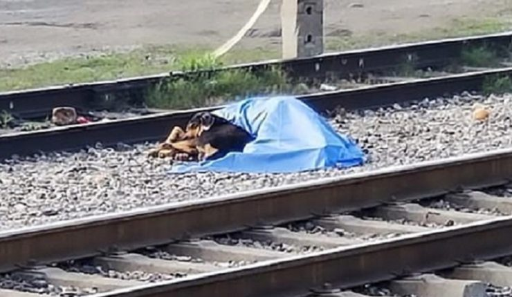 Tren arrolla y mata a un hombre; su perro cuida el cuerpo
