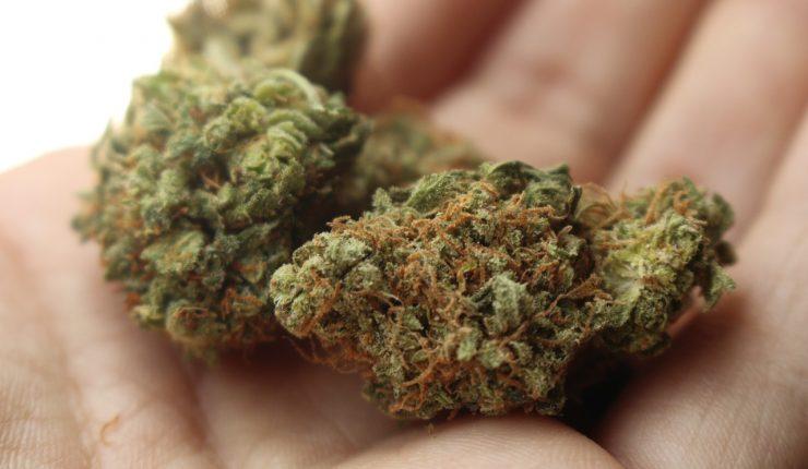 los-mitos-y-verdades-de-la-marihuana-en-medio-de-la-crisis-mundial-por-coronavirus