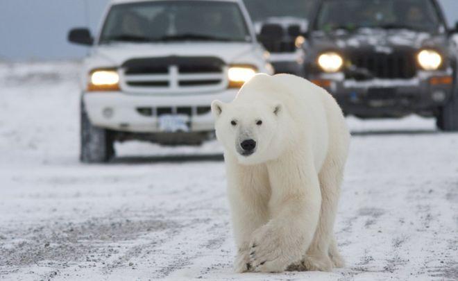 Héroe: Salvó a sus hijos y murió por ataque de oso polar