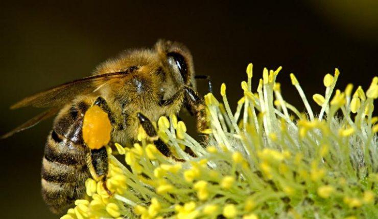 Los insectos están desapareciendo de la Tierra a una velocidad de vértigo