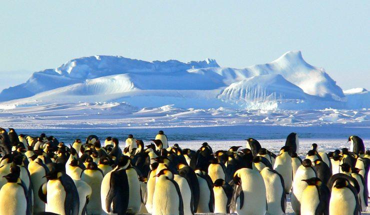Resultado de imagen para pingüino emperador