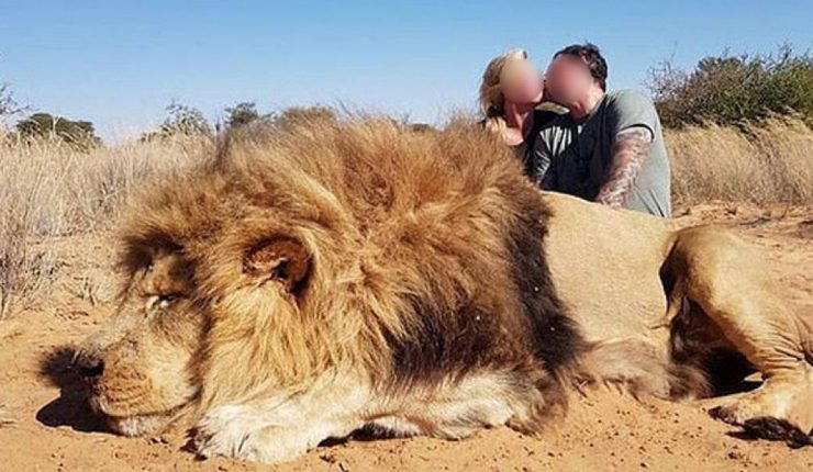 Mataron a un león y se sacaron fotos besándose detrás de él