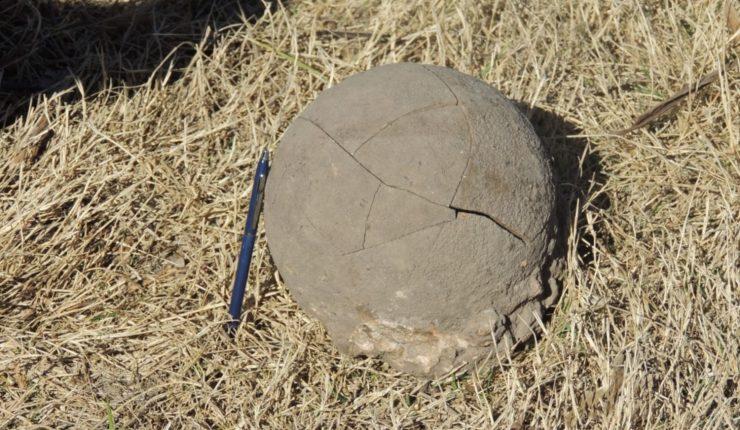 Caída de un árbol dejó expuesto huevos de dinosaurio de más de 70 millones de años