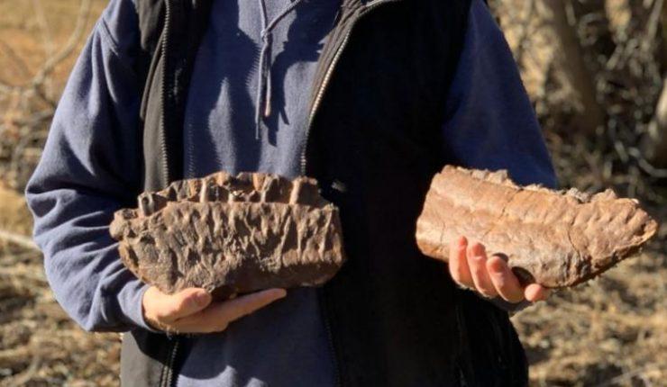 Descubren a un pariente del tiranosaurio en Canadá